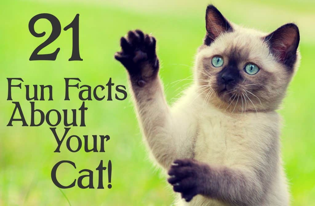 21 Fun Facts About Your Cat